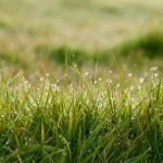 Lawn Disease Identification Part 4: Red Thread