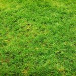 Lawn Disease Identification Part 1: Brown Patch