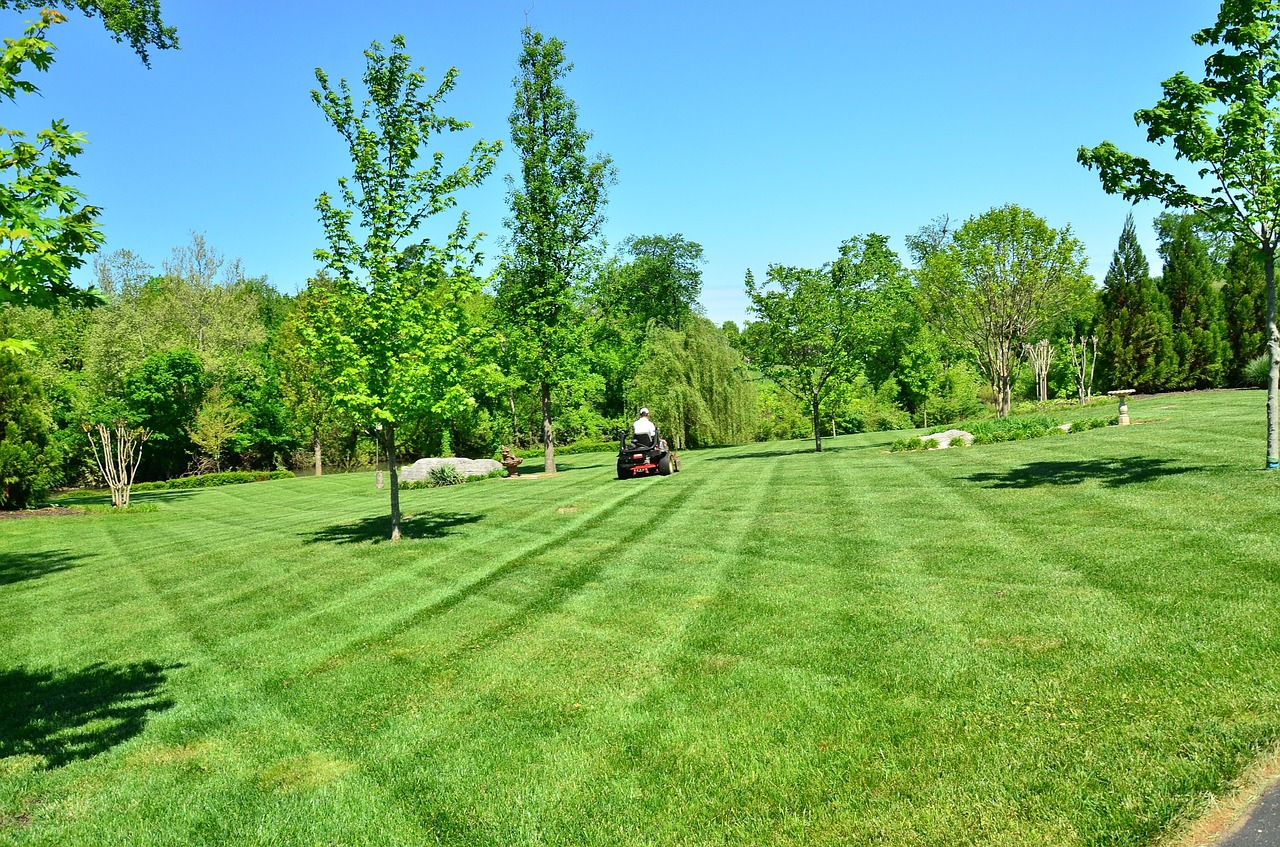 4 Key Things To Look For When Hiring A Lawn Care Company