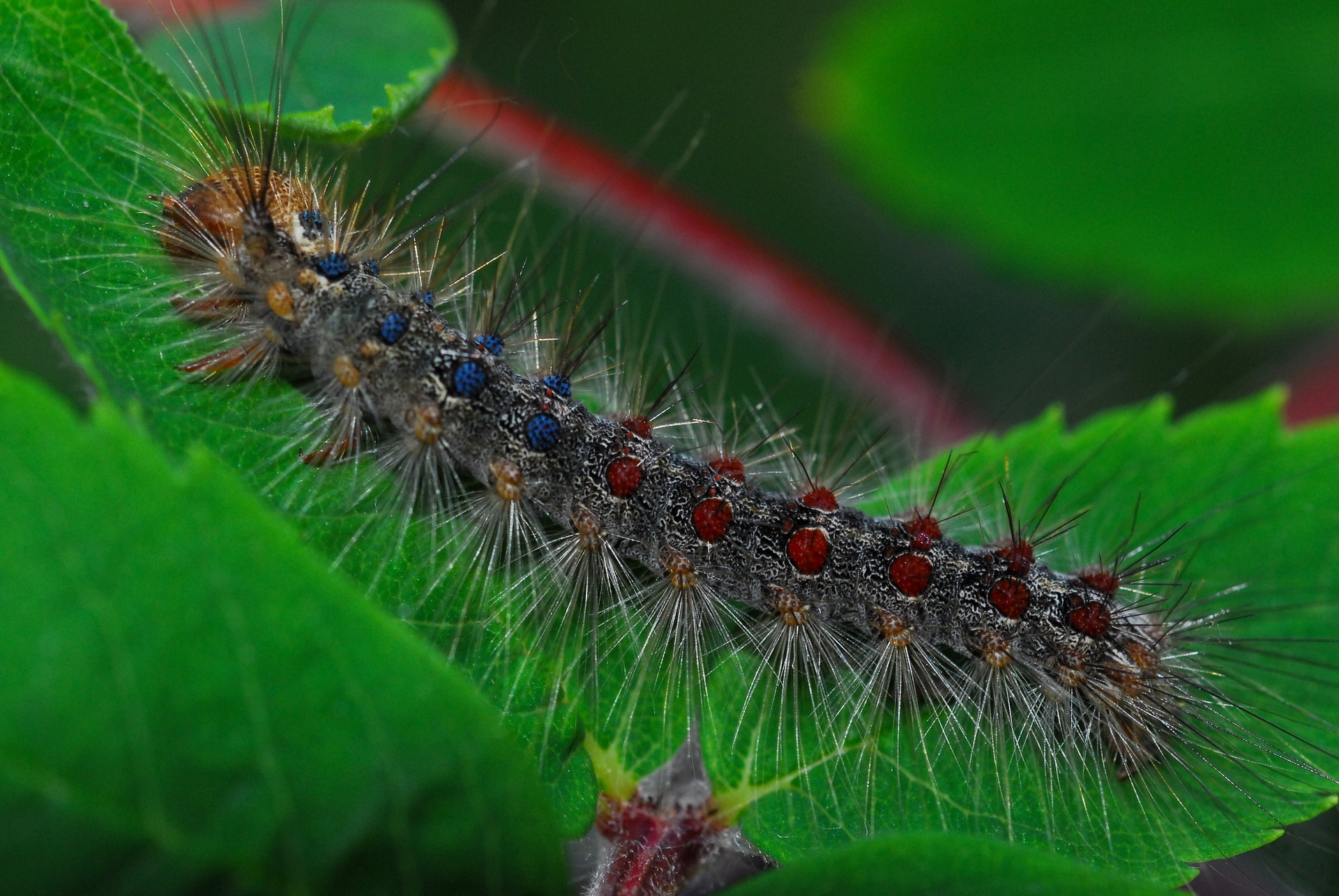 Gypsy Moth Most Wanted Pests Threatening Your Lawn Part 2