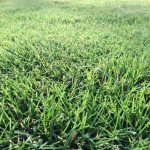 How To Choose The Best Lawn Care Program For Your Home
