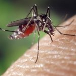 How To Prevent Mosquitoes With Help From Valley Green!