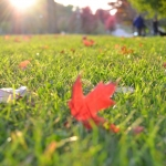 How To Handle Fall Lawn Prep In Minnesota