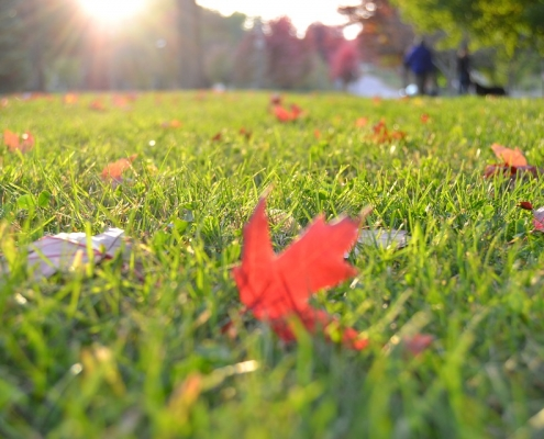 Leaves on a lawn in the fall.