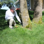 How Much Does Emerald Ash Borer Treatment Cost?