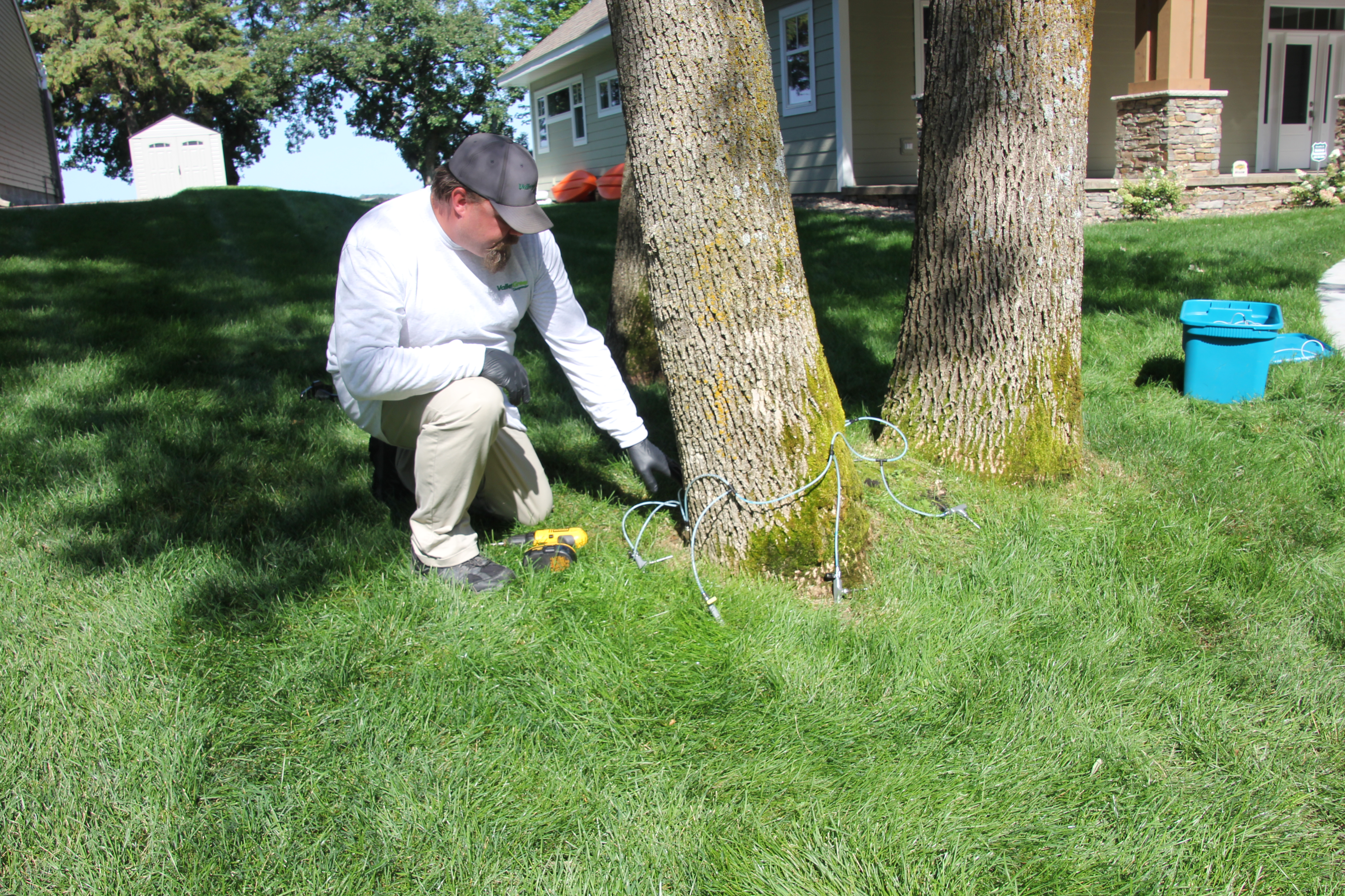 Valley Green employee Brad performing a micro-infusion method of Emerald Ash Borer treatment on an ash tree in Sartell, Minnesota.