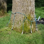 What Are My Emerald Ash Borer Management Options?